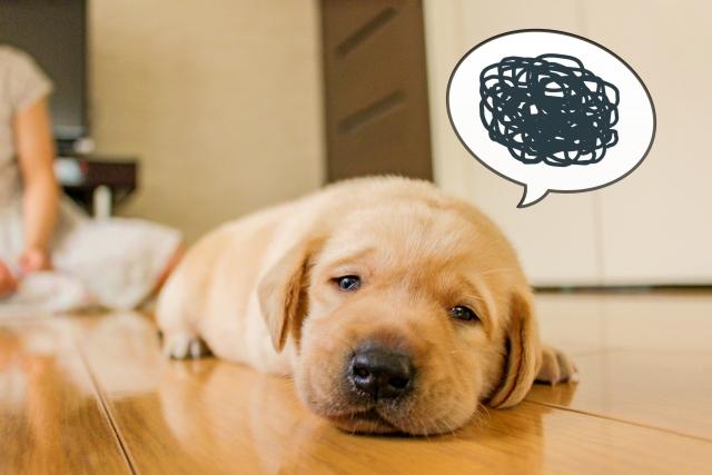 R1ヨーグルトは胃腸炎には効かない!感染力の強さがやばい…!