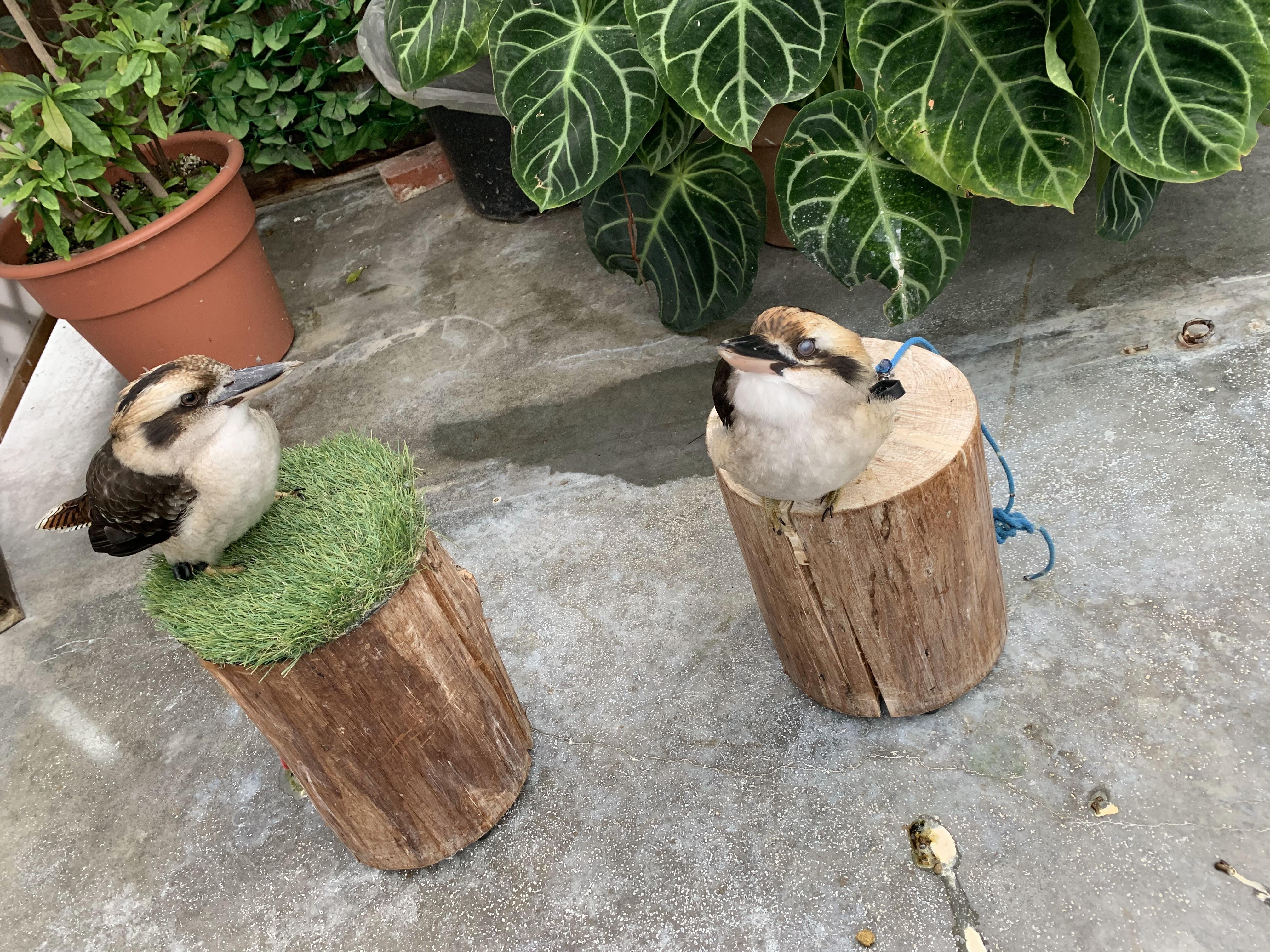 掛川花鳥園の動かない鳥ハシビロコウは?雨でも楽しめる?