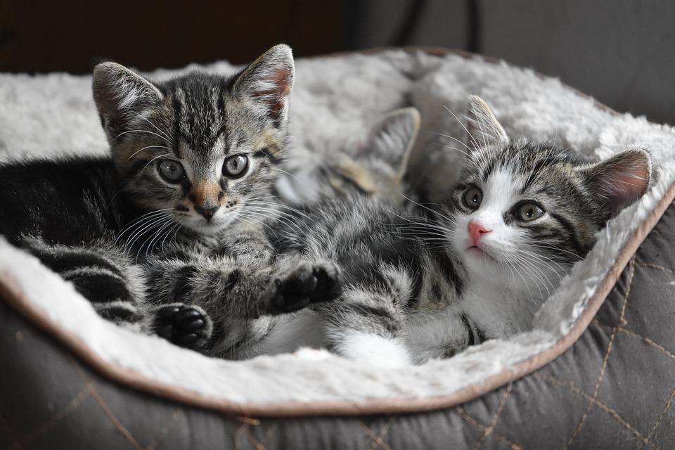 子供が猫アレルギーに・症状は?目のかゆみ、薬などの対処法は?